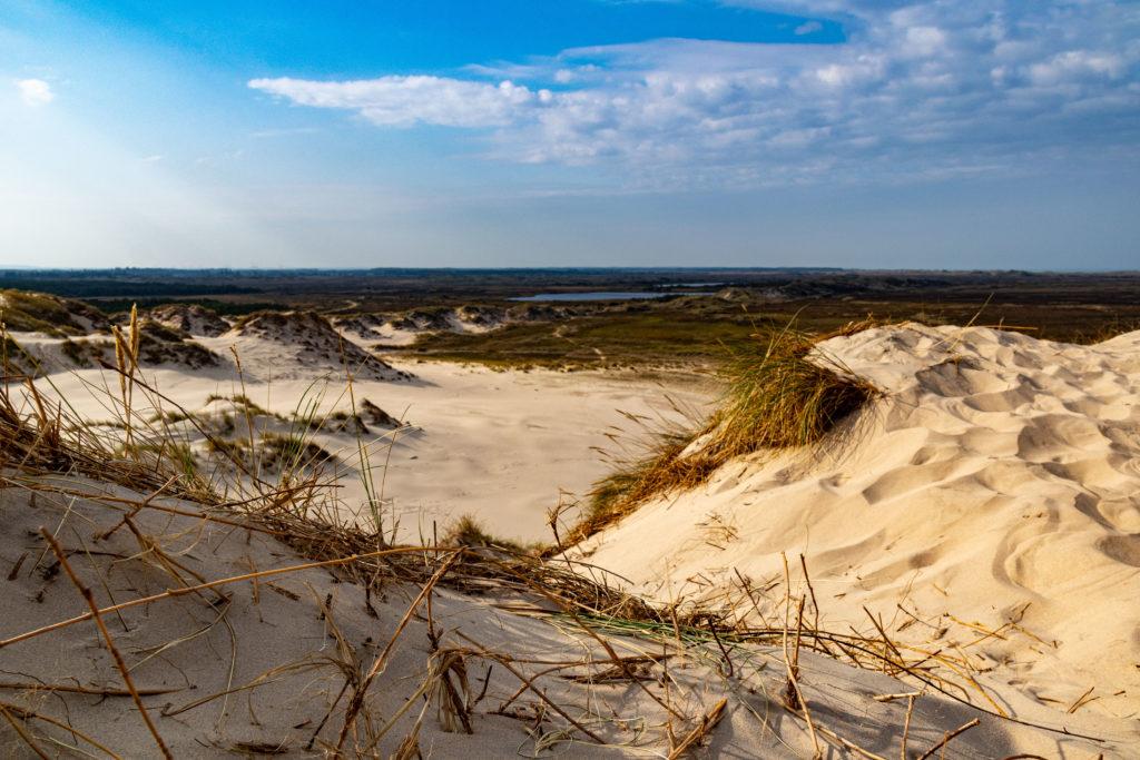 Sand und Wald daneben