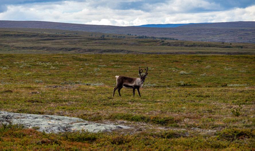 Fazit und Reisetipps Norwegen